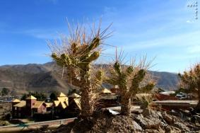 Colca_Canyon_AZ_-21
