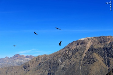Colca_Canyon_AZ_-24