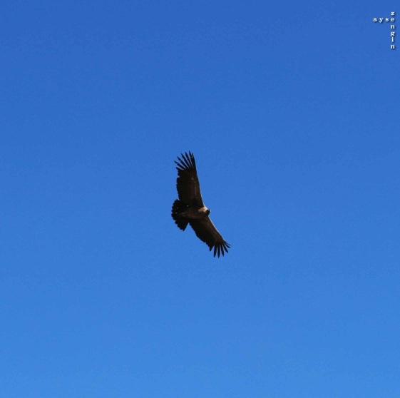 Colca_Canyon_AZ_-25