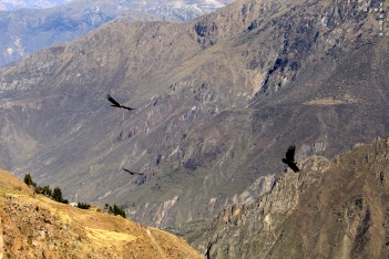 Colca_Canyon_AZ_-26