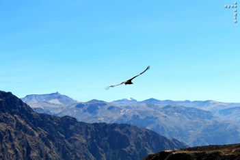 Colca_Canyon_AZ_-28